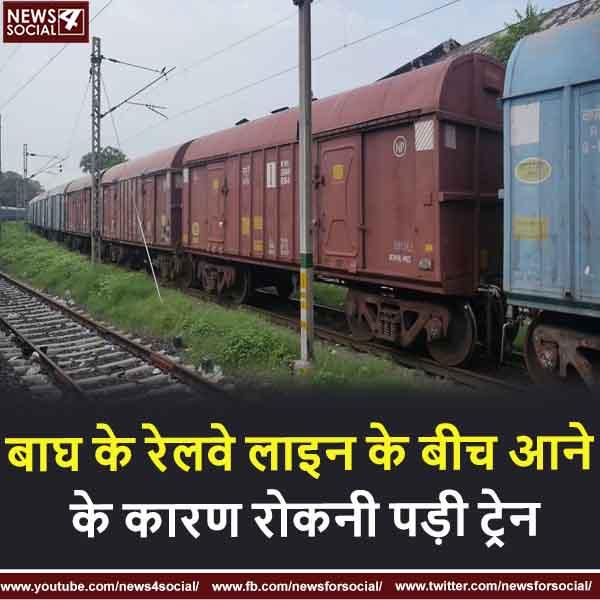 बाघ के रेलवे लाइन के बीच आने के कारण रोकनी पड़ी ट्रेन